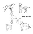 hand drawn dogs sketches vector image vector image