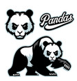 panda mascot istyle with separated head vector image vector image