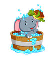 an elephant is bathing and playing with a turtle vector image