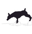 dog stands silhouette vector image vector image