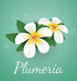 flower plumeria real style vector image vector image