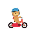 happy little bear riding a red bike vector image
