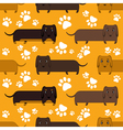 dachshunds vector image vector image