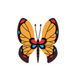 exotic color butterfly hand drawn moth wings or vector image