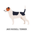 jack russell terrier lovely dog hunting breed vector image vector image