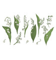 lily of the valley realistic collection hand vector image vector image