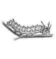 royal horned caterpillar vintage vector image vector image