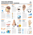 The Five Senses Infographic Chart Diagram vector image vector image