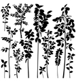 Tree saplings vector image vector image