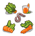 carrot set five elements on white background vector image