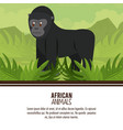 african animals cartoons vector image vector image