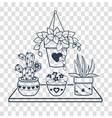 black houseplant vector image vector image