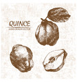 digital detailed quince hand drawn vector image vector image