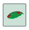 ladybird on leaf ladybug on white vector image vector image