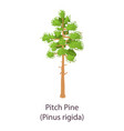 pitch pine icon flat style vector image vector image