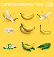set banana compositions on a yellow background vector image