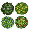 Bushes with colorful flowers vector image