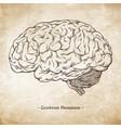 hand drawn anatomically correct human brain vector image vector image