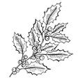 hand drawn holly vector image vector image