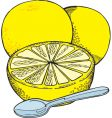 grapefruit illustration vector image vector image