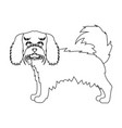 spaniel single icon in outline stylespaniel vector image vector image