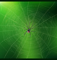 spider weaving its web realistic background vector image vector image