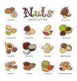 nuts nutshell of hazelnut almond and walnut vector image