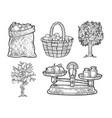 apple fruits set line art sketch vector image vector image