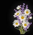 beautiful daisies and lavender flowers vector image vector image
