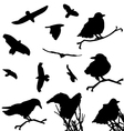 Bird Silhouette Animal Clip Art vector image