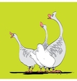 Farm bird wild or domestic goose vector image