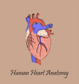 hand drawn coloured human heart vector image vector image