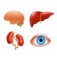 internal organs icon set vector image vector image