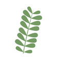 tropical leaves nature foliage flora botany icon vector image vector image