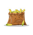 corncobs with yellow corns and green leaves vector image