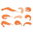 flat set of whole and peeled shrimps vector image