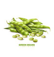 green beans realistic image vector image vector image