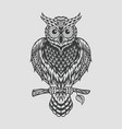 hand drawn owl sitting on branch engraved style vector image