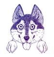 sketch of funny husky or shepherd puppy vector image