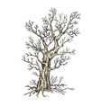 sketch tree vector image