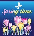 spring background with crocuses vector image