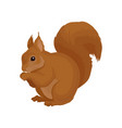 Flat icon of brown squirrel forest rodent