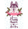 lucky husky dog sticks out its tongue ribbon and vector image