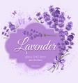 Lavender background vector image vector image