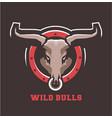 bull head emblem vector image vector image