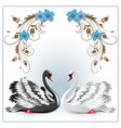 elegant white and black swan vector image