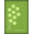 gift card with abstract dandelion vector image vector image