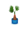 palm houseplant in flowerpot element for vector image
