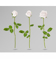 realistic white rose set three 3d roses on vector image