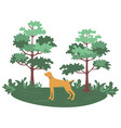 green forest with trees and bushes and hunting dog vector image vector image